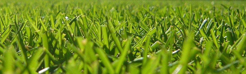 しあわせになれる芝生日記TOPイメージ