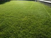 21ミリ芝刈りとバリダシン散布