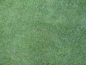 芝生の密度アップ