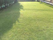 芝刈りと雑草刈り